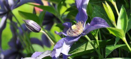 2015-06-13-Giverny-Jardins-de-Monet-15.jpg