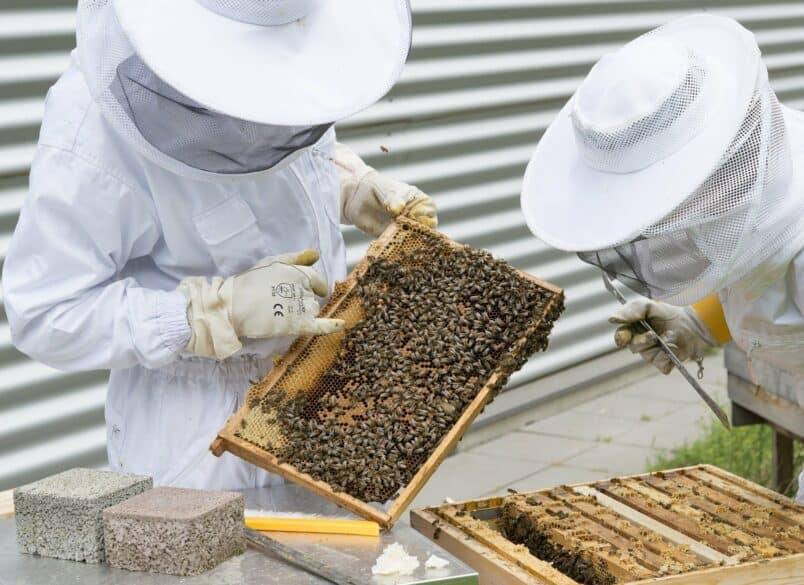 Beekeeper 2650663 1920