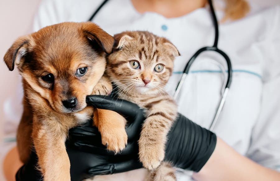 Permanence vétérinaire